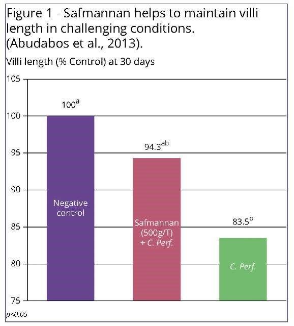 СафМаннан способствует сохранению длины кишечных ворсинок